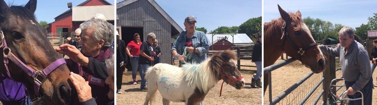 Alzheimer's patients enjoying Equine therapy on Long Island